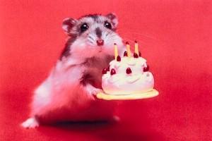 hamsterbirthday